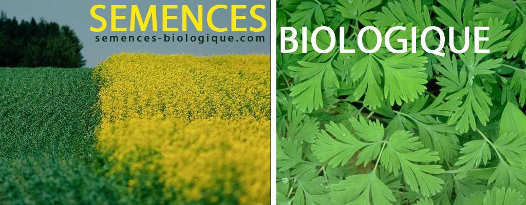 Semences biologique
